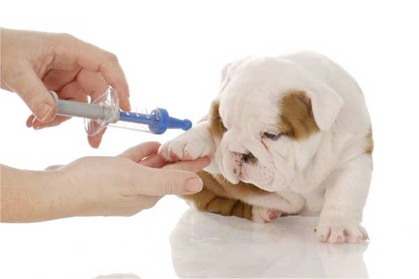 Điều kiện và thủ tục xin phép quảng cáo thuốc thú y
